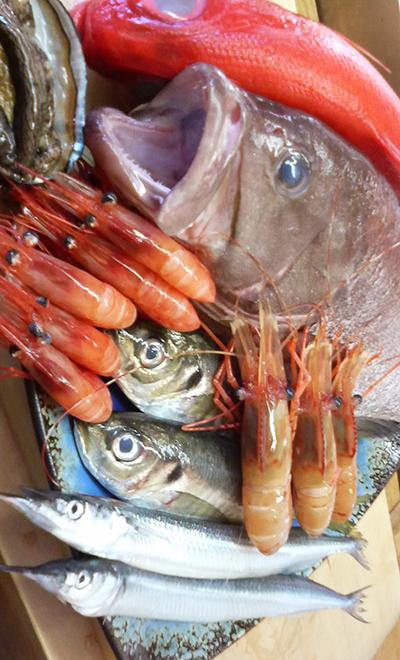ハタ 牡丹海老 甘エビ 釣り鯵 釣りキンキ アワビ 赤貝 カンヌキサヨリ 金目鯛 白魚