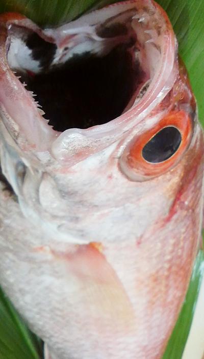 本日は のどぐろ 釣りキンキ 秋刀魚 小肌 関鯖 ハタ 穴子 牡丹海老 マツブ 鯨 がおすすめです!