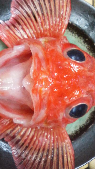 本日は 釣りキンキ 金目鯛 蝦蛄 松川鰈 鮟肝 真ダチ 牡丹海老 ヤリイカ 鱈子 鯵 がおすすめです!